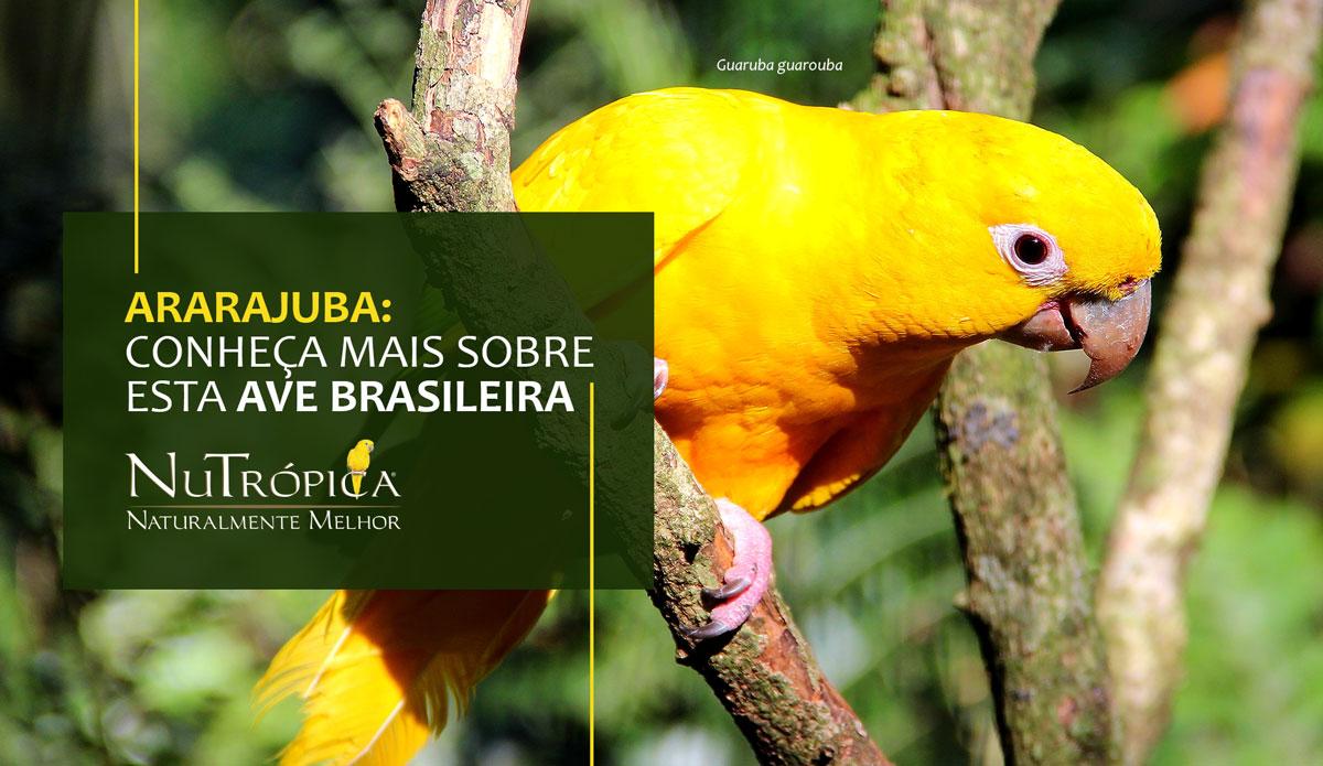 Você já ouviu falar sobre a Ararajuba, esta linda ave, completamente brasileira?