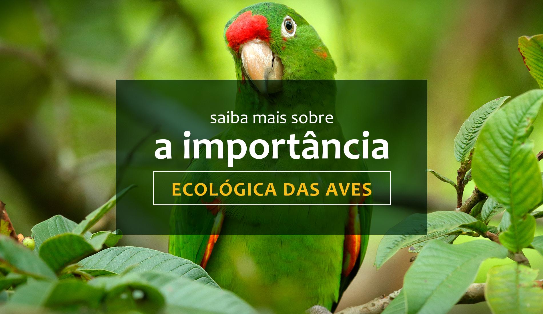 Saiba mais sobre a importância ecológica das aves