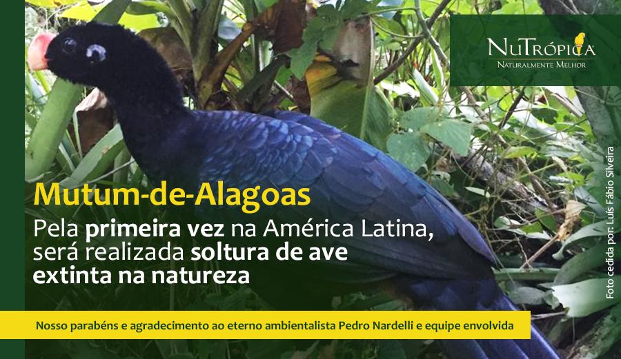 Conheça mais sobre o  Mutum-de-Alagoas