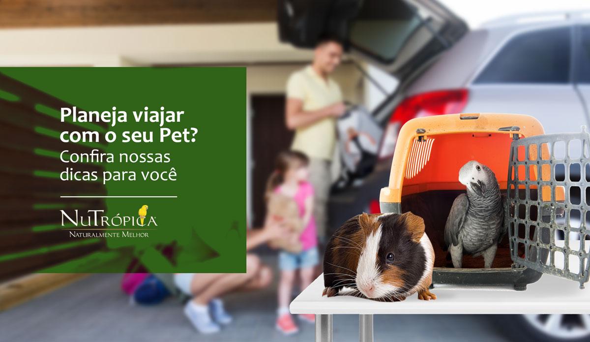 Confira algumas dicas para viajar com o seu Pet