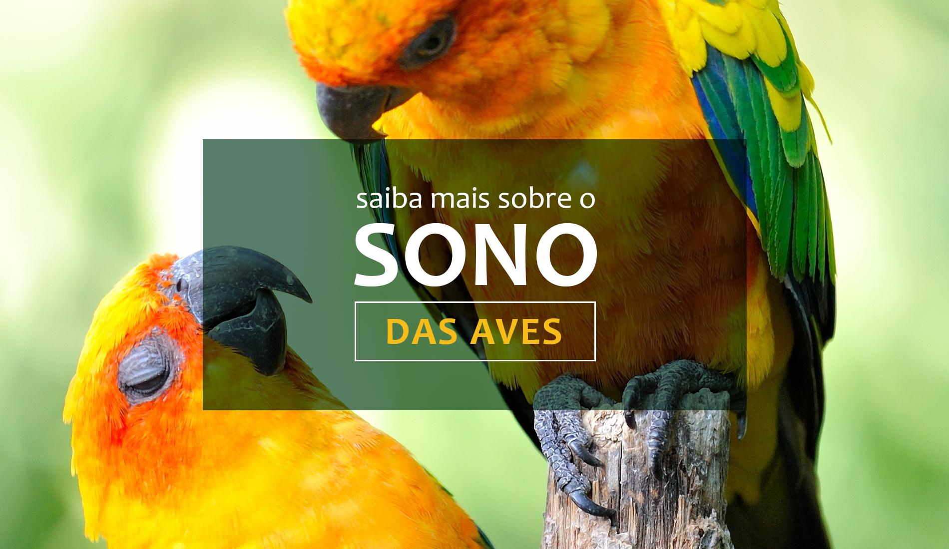Veja mais informações sobre o sono das aves