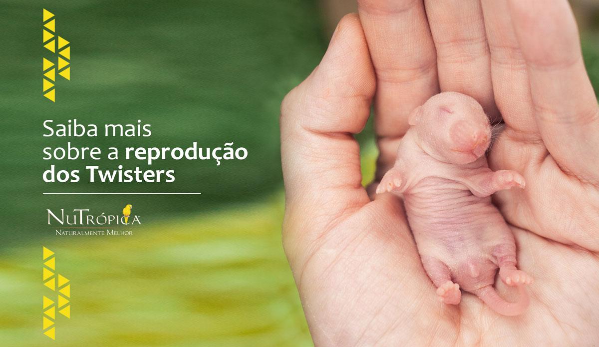 Saiba mais sobre a reprodução dos Twisters