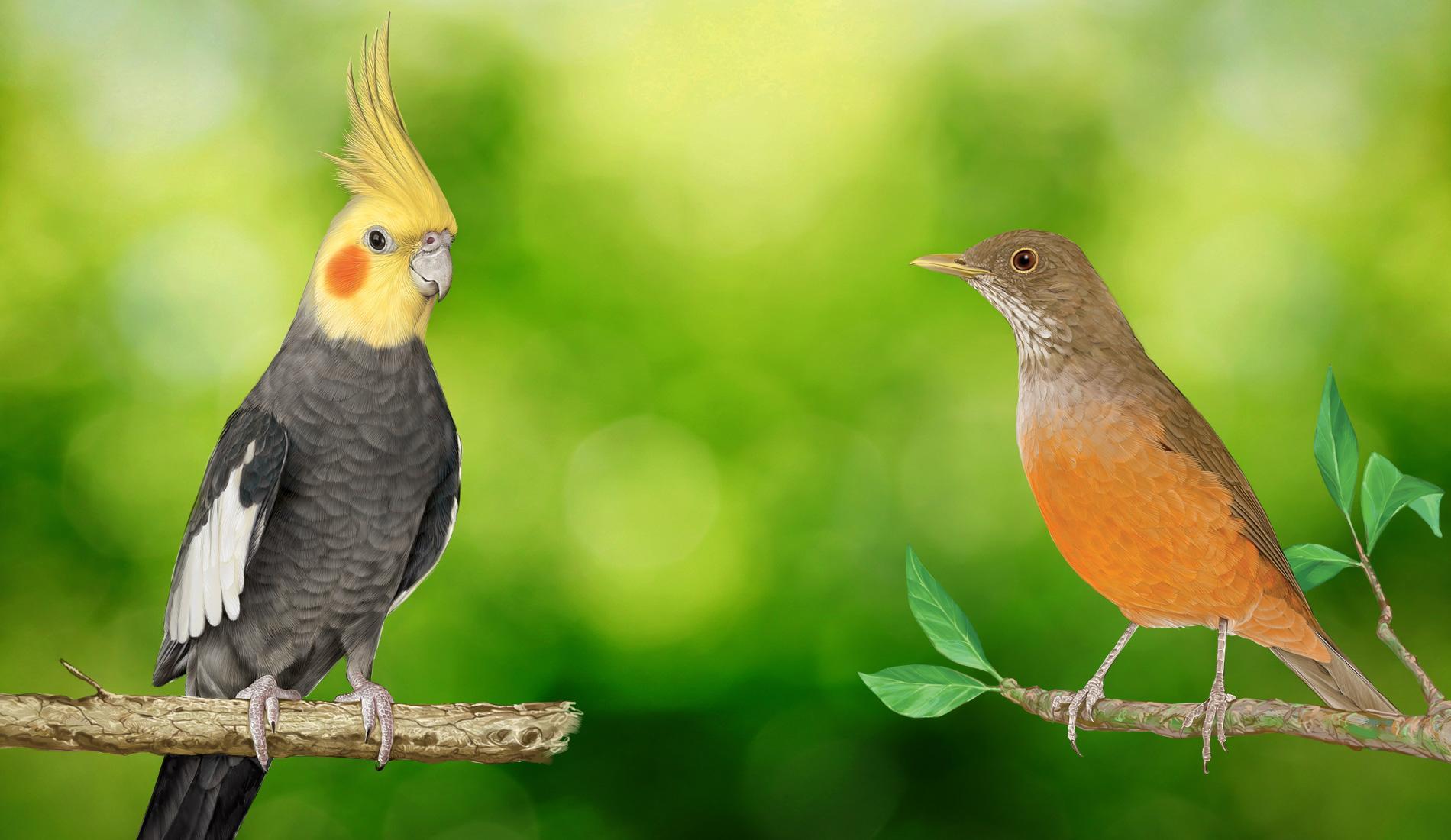 Psitacídeos e Passeriformes