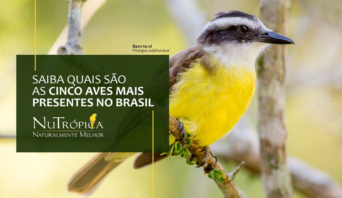 Saiba quais são as 5 aves mais presentes no Brasil