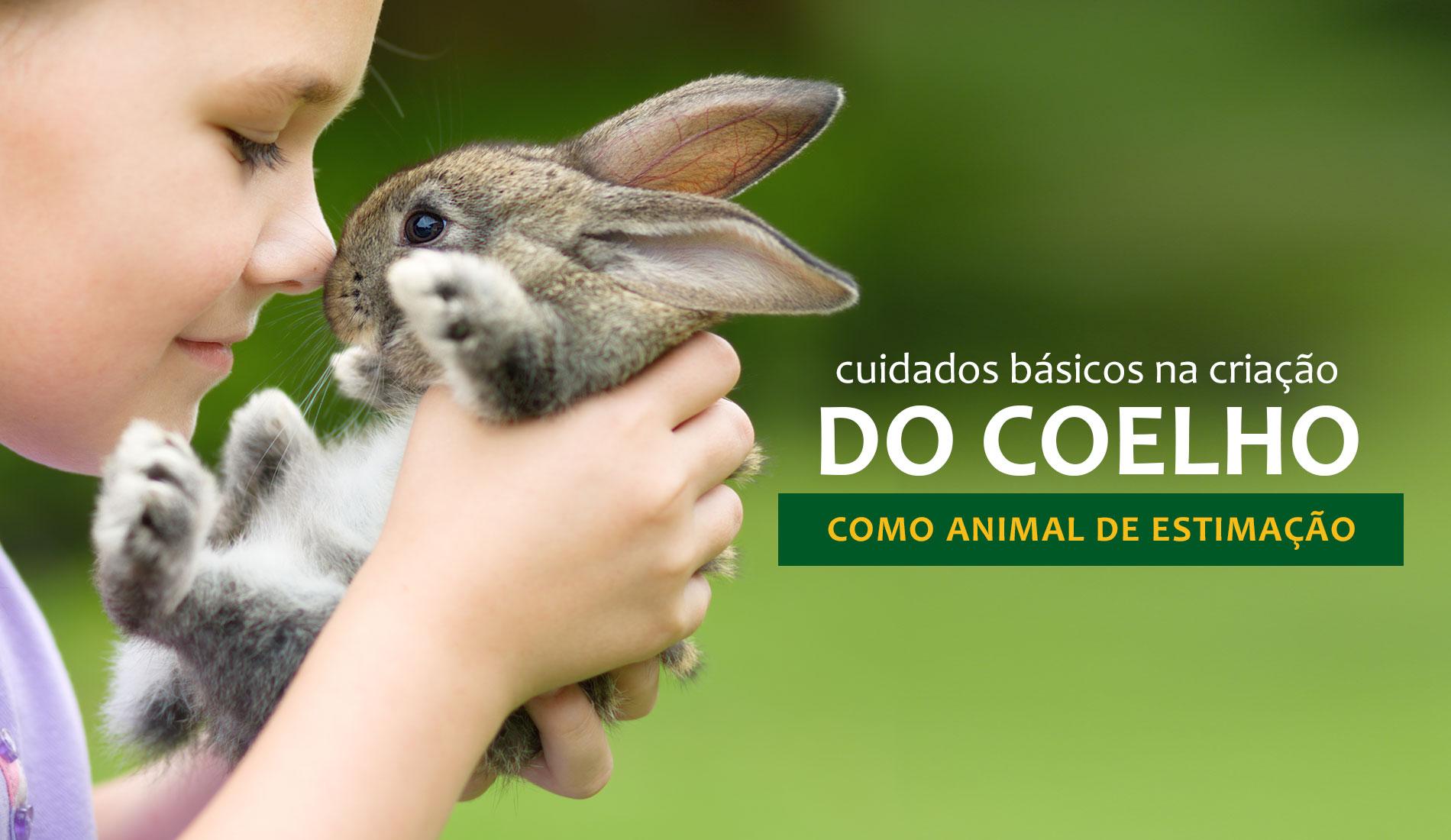 Confira alguns cuidados importantes com os coelhos