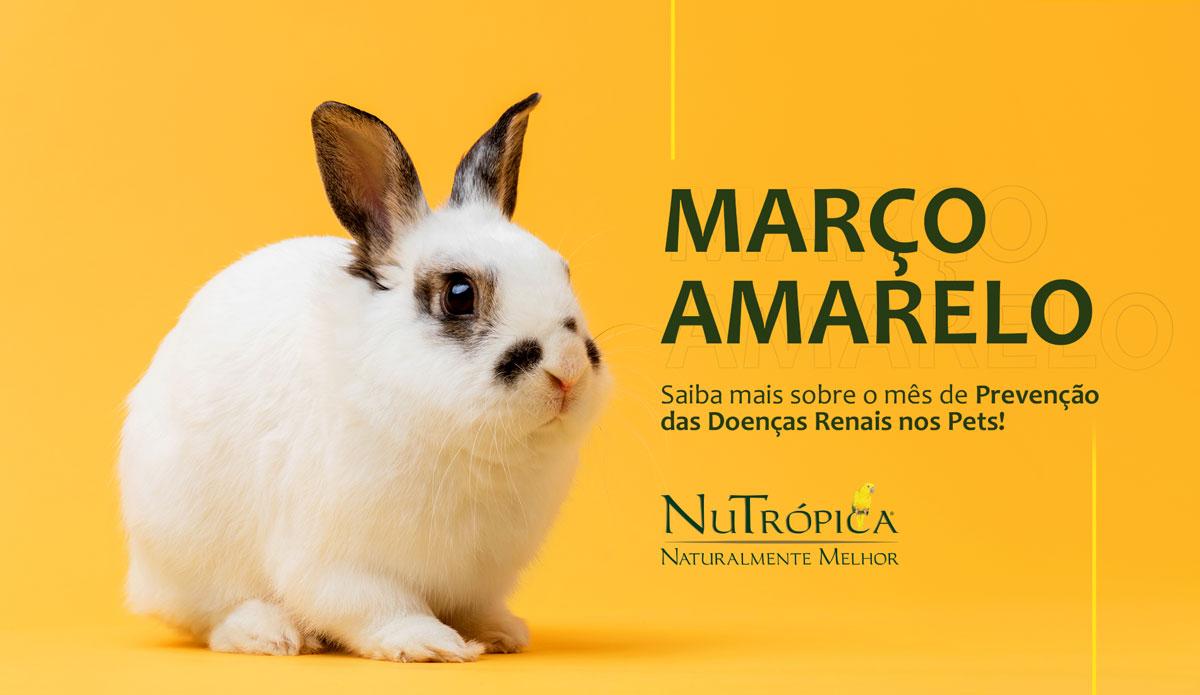 Saiba mais sobre o mês de Prevenção das Doenças Renais nos Pets!