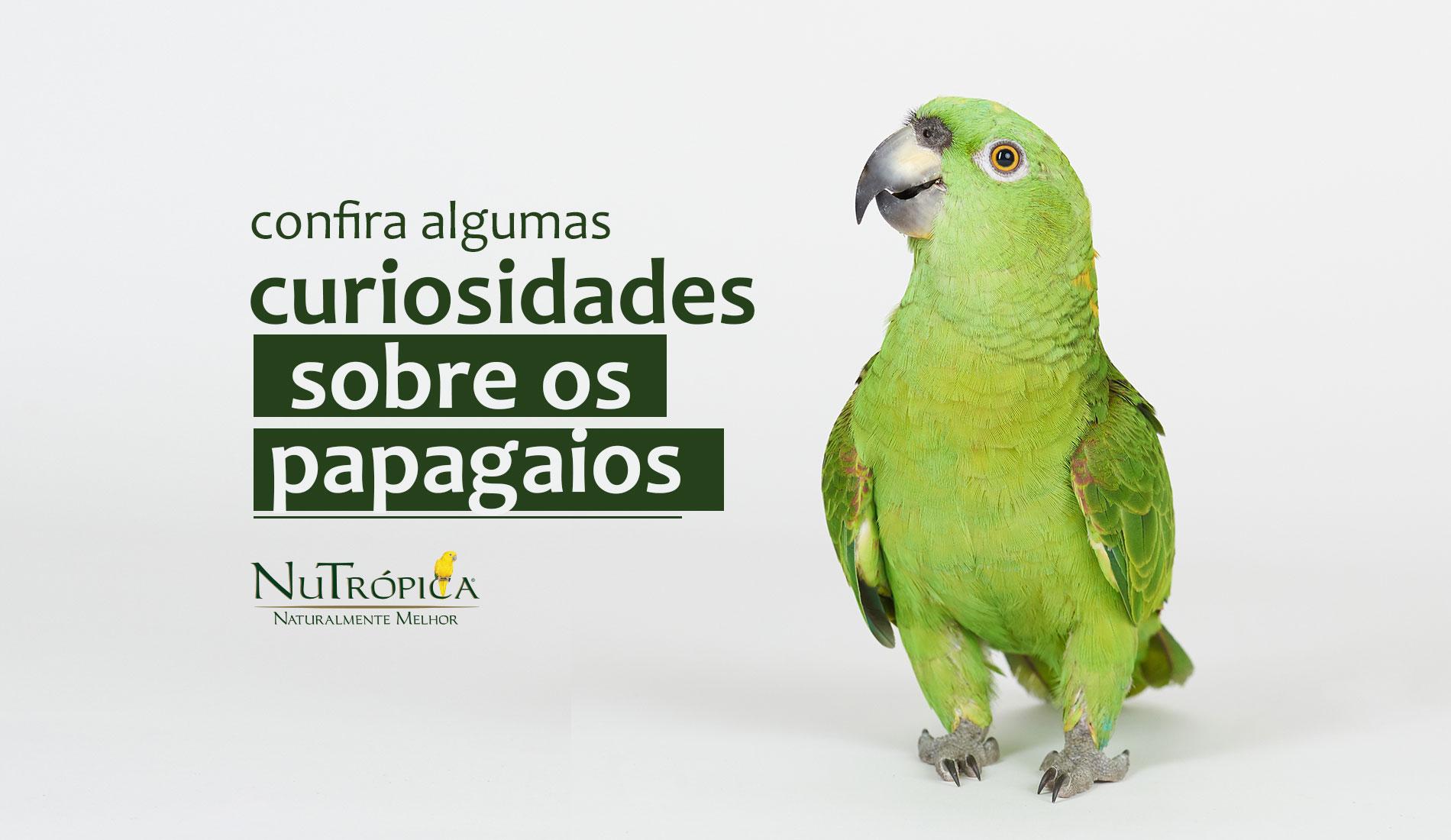 Confira algumas curiosidades sobre os Papagaios