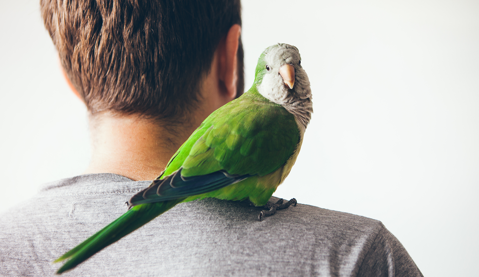 Saiba como escolher a ave mais apropriada para você