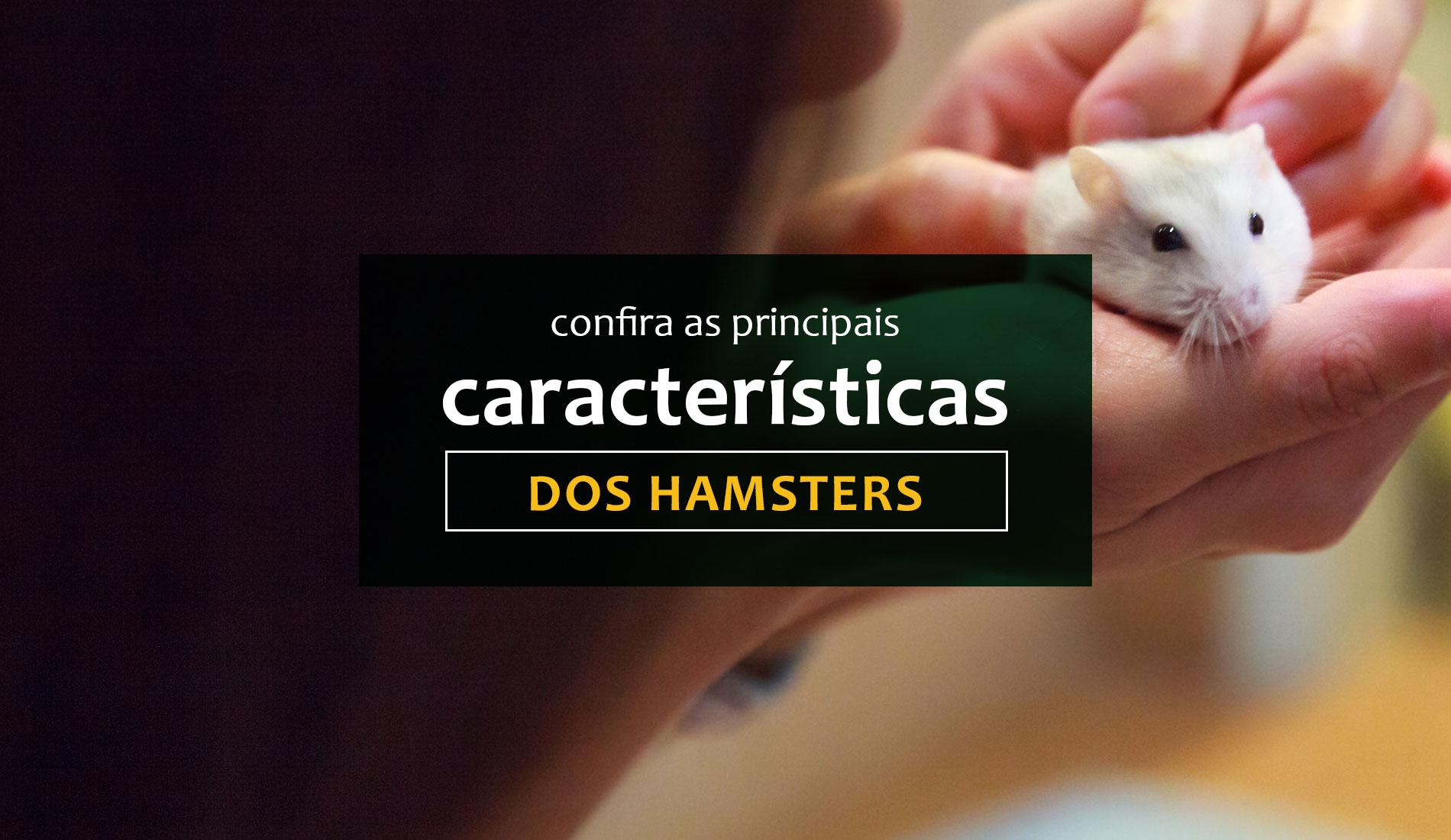 Confira as principais características dos Hamsters