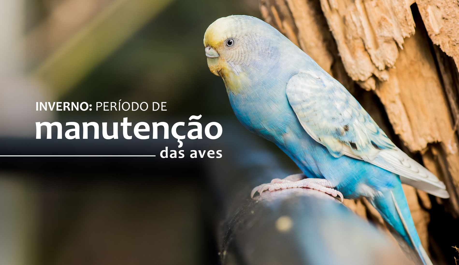 INVERNO: Período de manutenção das aves