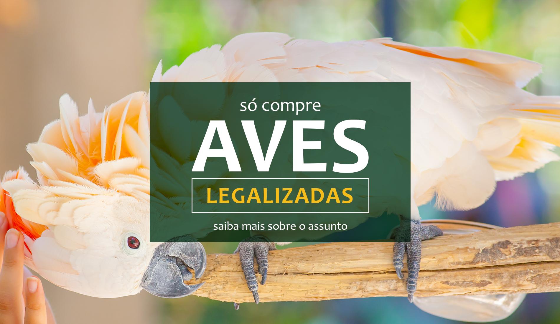 Só Compre Aves Legalizadas • Autorizadas pelo orgão ambiental