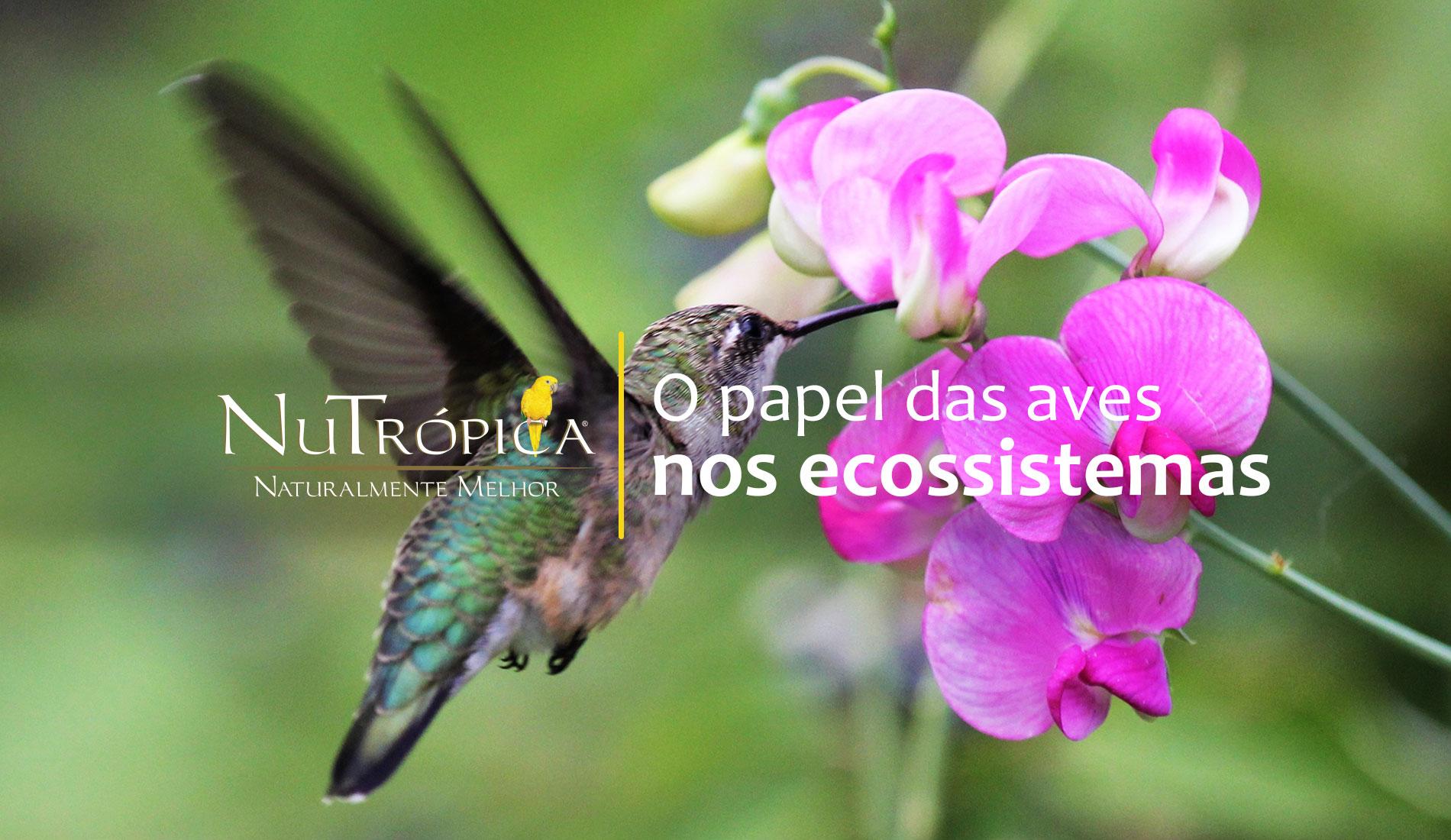 Saiba mais sobre o papel das aves nos ecossistemas
