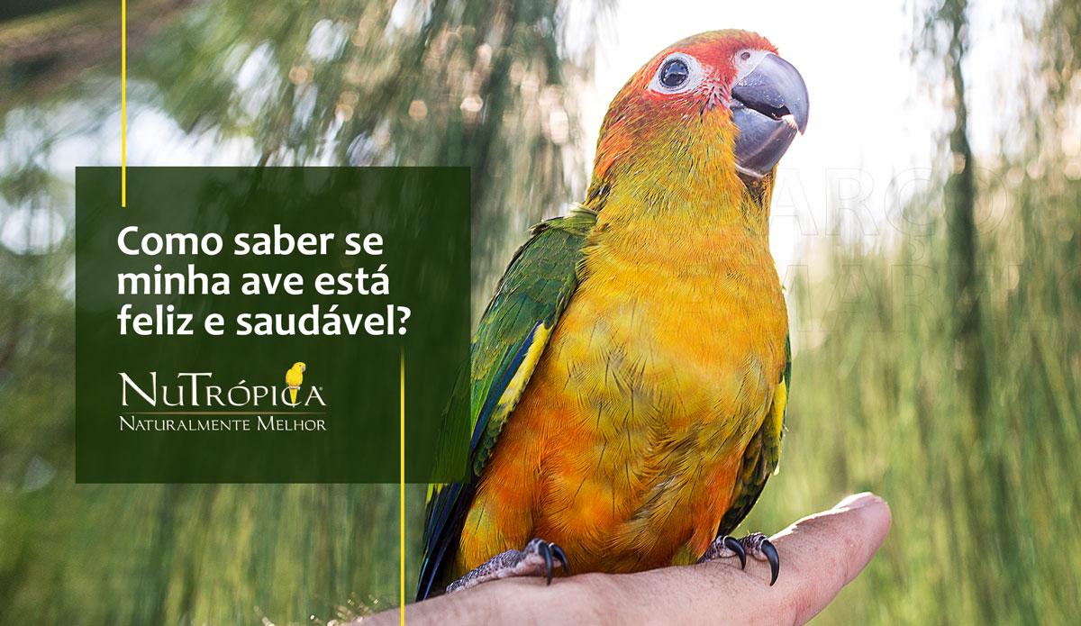 Como saber se a minha ave está feliz e saudável?