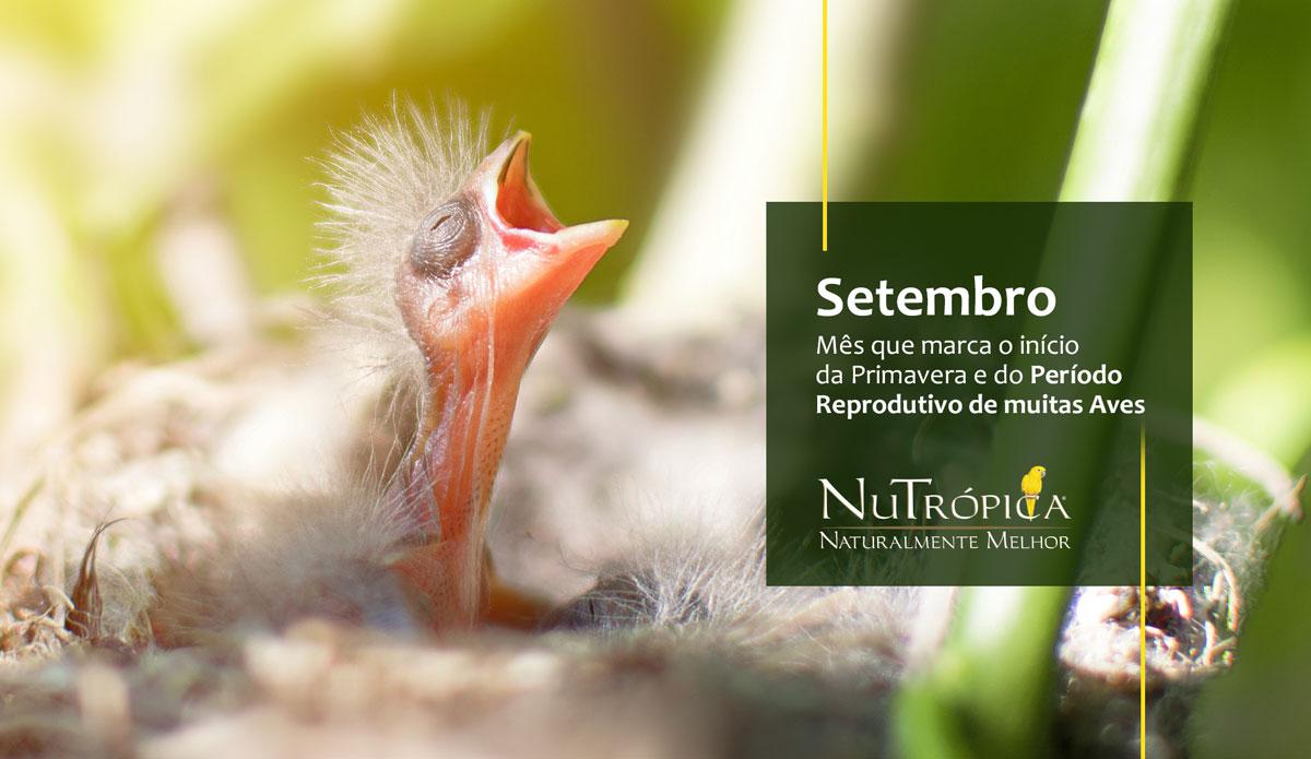 Setembro: Mês que marca o início da Primavera e do Período Reprodutivo de muitas Aves