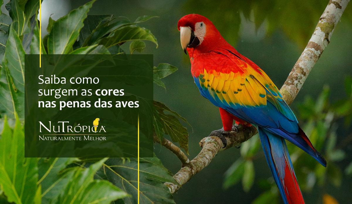 Saiba como surgem as cores das penas das aves
