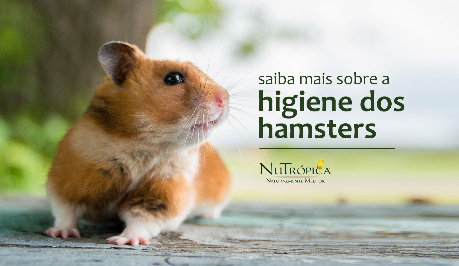 Saiba mais sobre como é a higiene dos hamsters