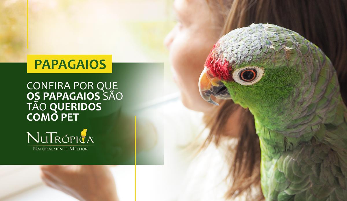 Confira por que os Papagaios são tão queridos como Pet