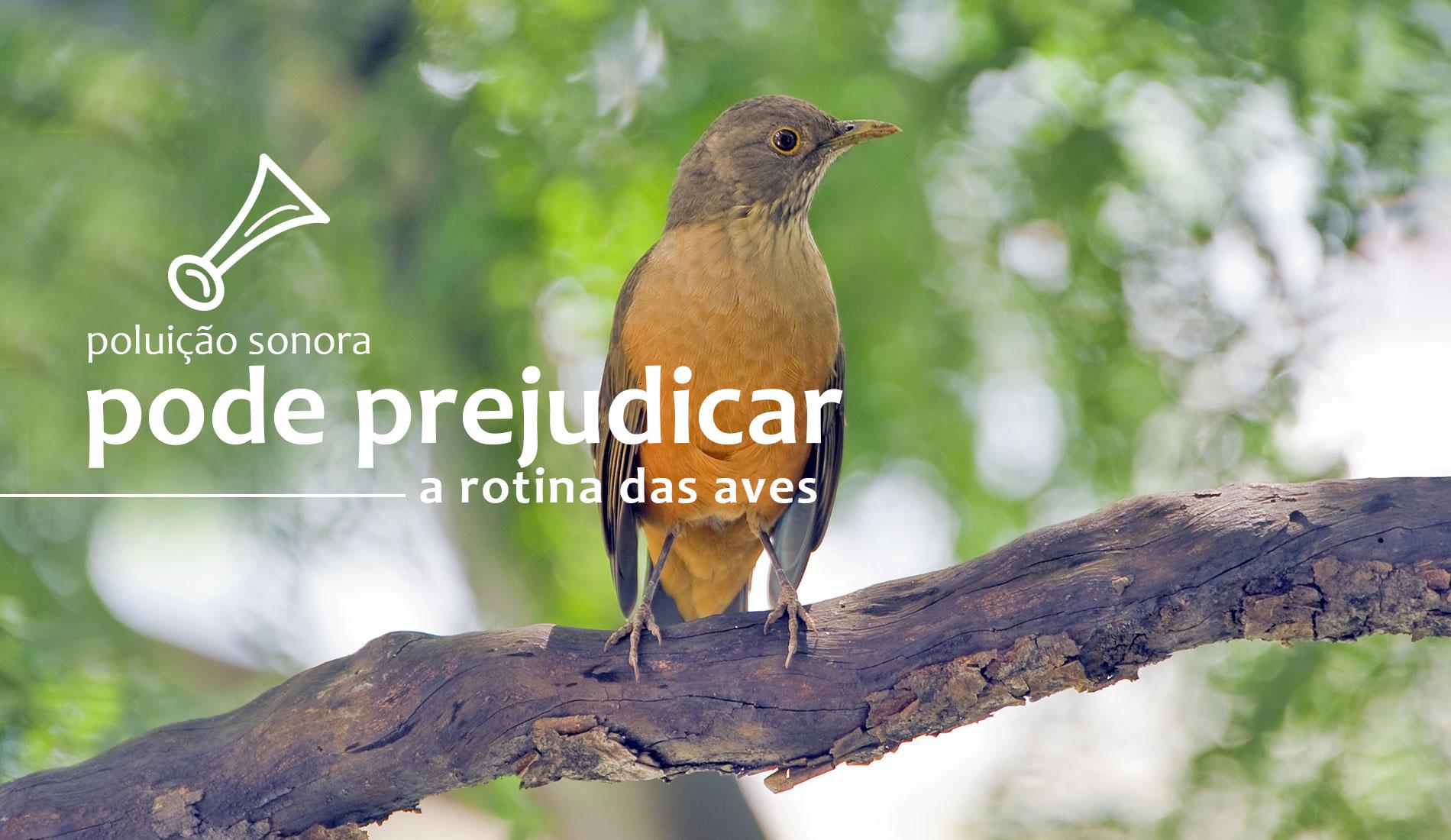 A poluição sonora pode prejudicar a rotina das aves