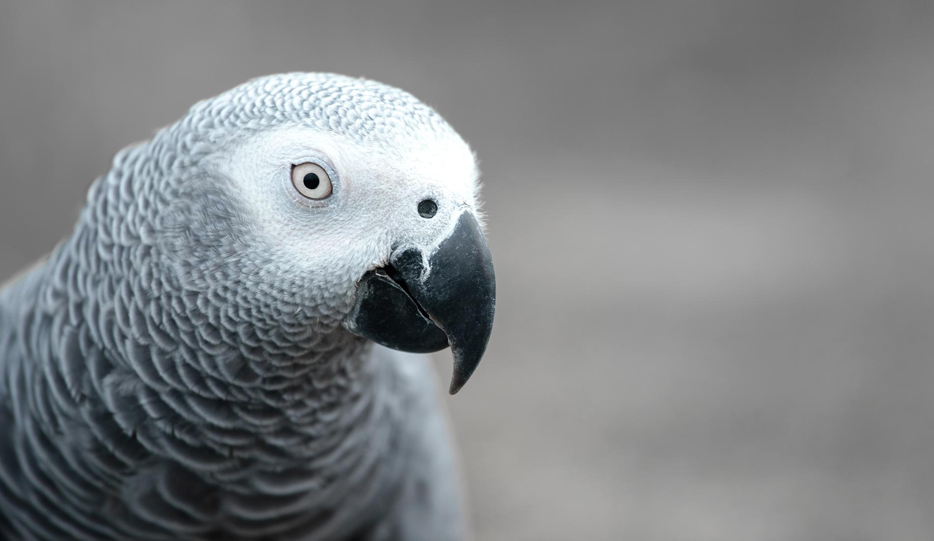 Confira alguns cuidados com a sua ave no inverno
