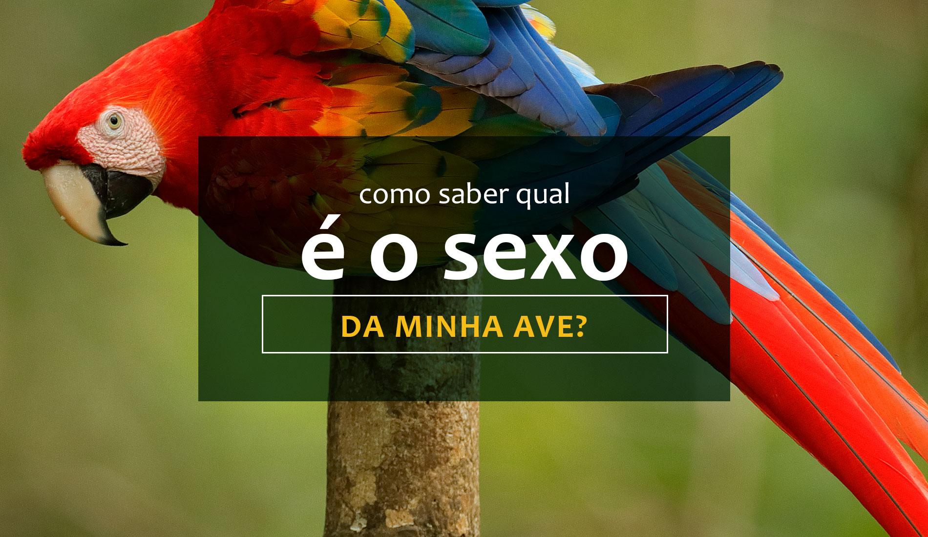 Veja aqui como saber qual é o sexo da sua ave?