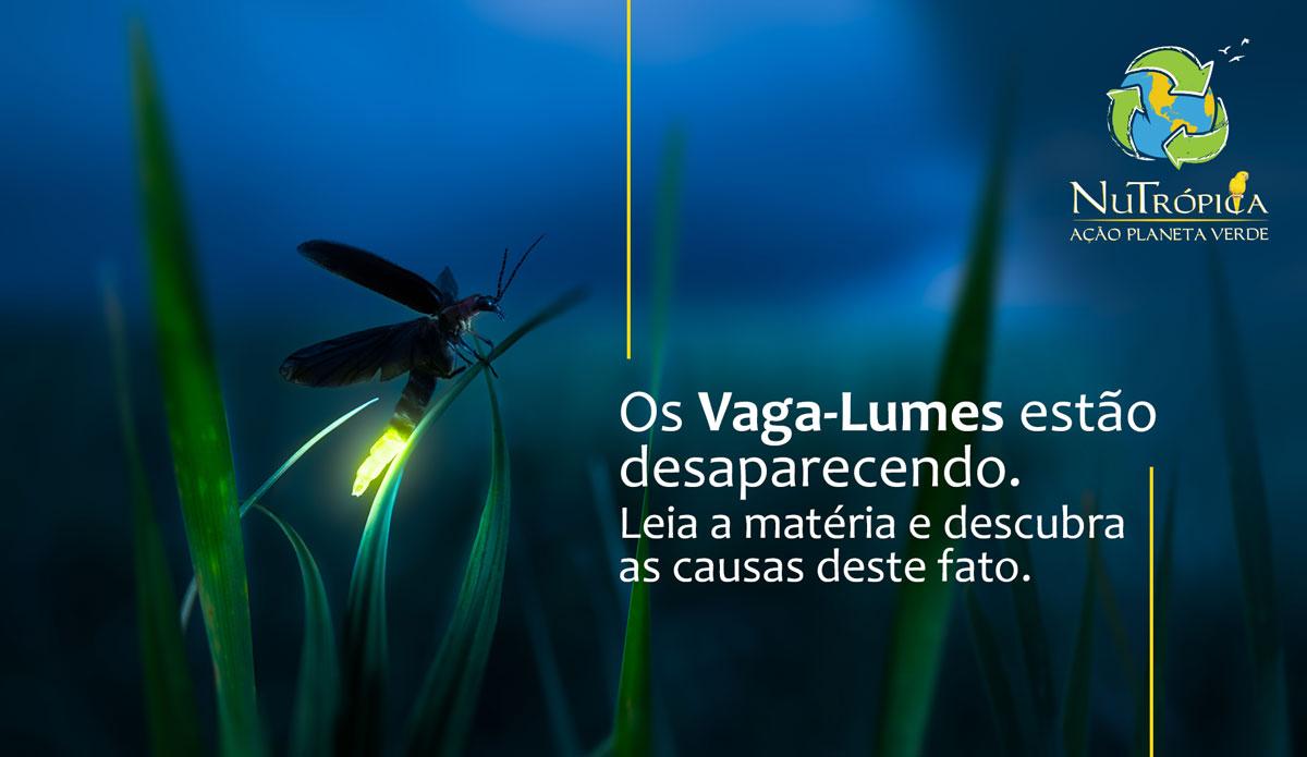 Os Vaga-Lumes estão desaparecendo. Descubra as causas deste fato.